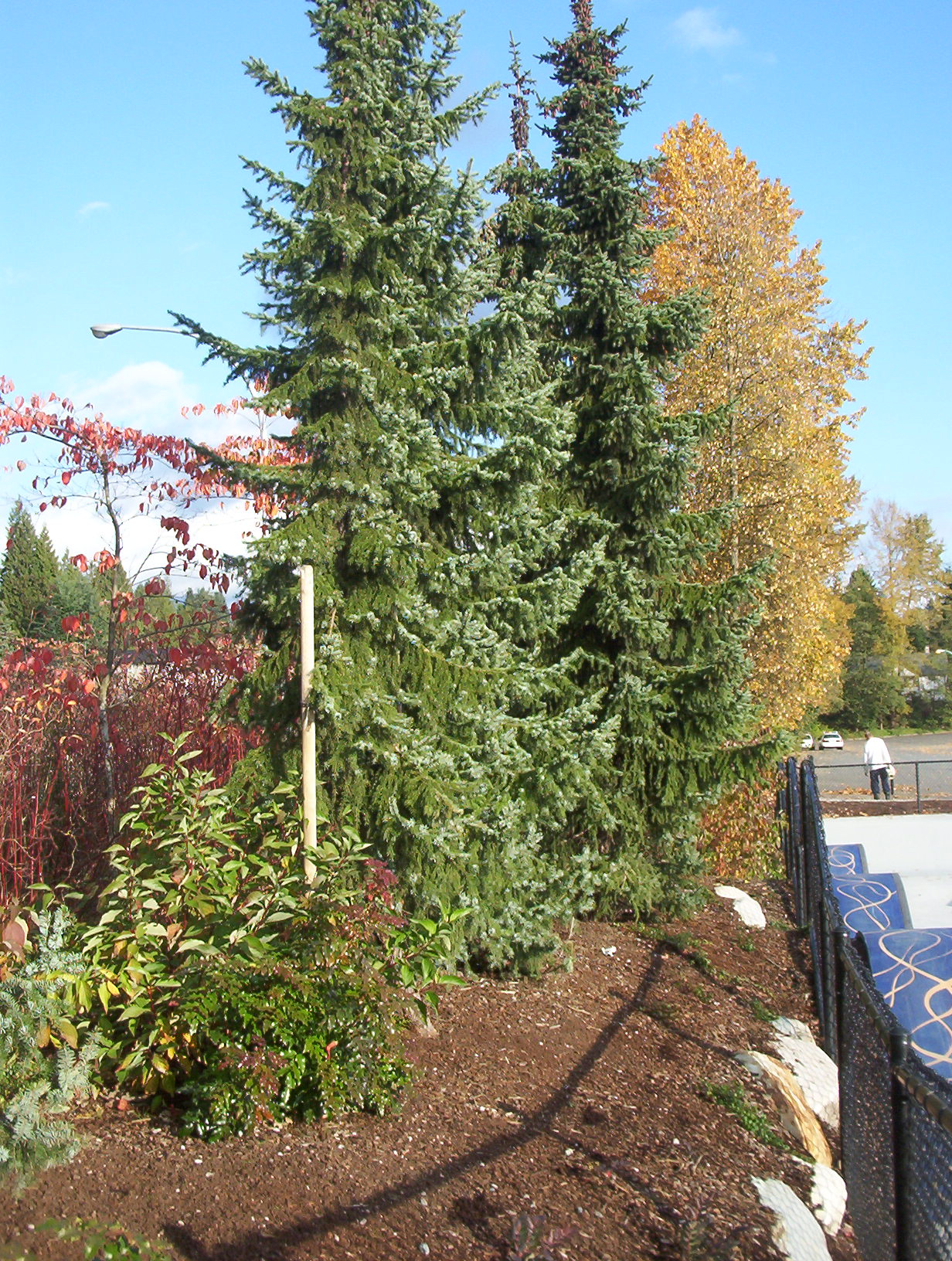 north Vancouver skate park - commercial landscaping