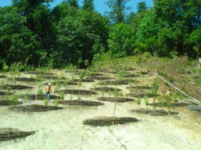 ruskin dam erosion control